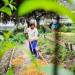 22 mai 2013 : Atelier jardinage à l'occasion de la Fête de la nature organisée  par l'association MULTI'COLORS à la cité Python, dans le XXe arrondissement de Paris, France.  May 22, 2013: Festival of nature with the assocaition MULTI'COLORS. Paris, France.
